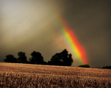 Rainbow Over Cornfield, Rural Johnson Co., IA