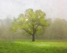 Green, Green Tree, Homestead, IA