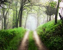 Green Path, Homestead, IA