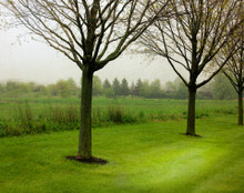 Trees in Green, Coralville, IA
