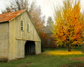 South Barn in Yellow Foliage #5