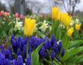 Spring Blooms, Amana, IA