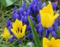 Spring Blooms #7