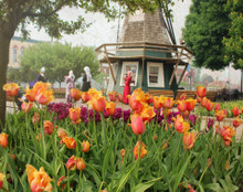 Tulip Time #5, Pella, Iowa