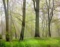 Spring Green #9