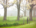 Horse in Soft Spring Shower, Southern Iowa
