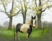 Horse in Soft Spring Shower #2, Southern Iowa