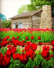 Tulip Time in Pella #1