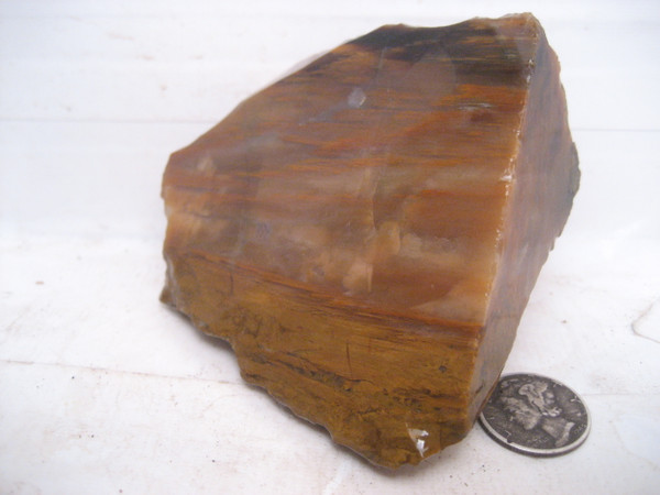 Grassy Mountain Petrified Wood