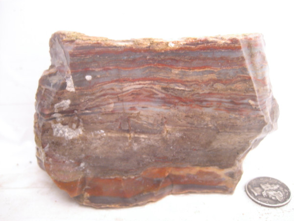 Arizona Petrified Wood.