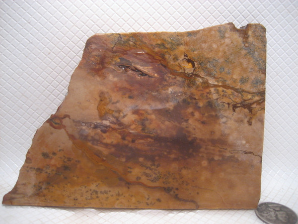 Deschutes Picture Jasper*