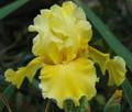 July Yellow