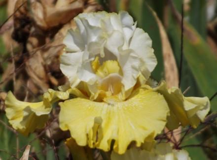 blooming August 20, 2017 in Oregon