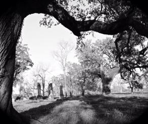 Cottage Plantation House Baton Rouge, Louisiana Tree View