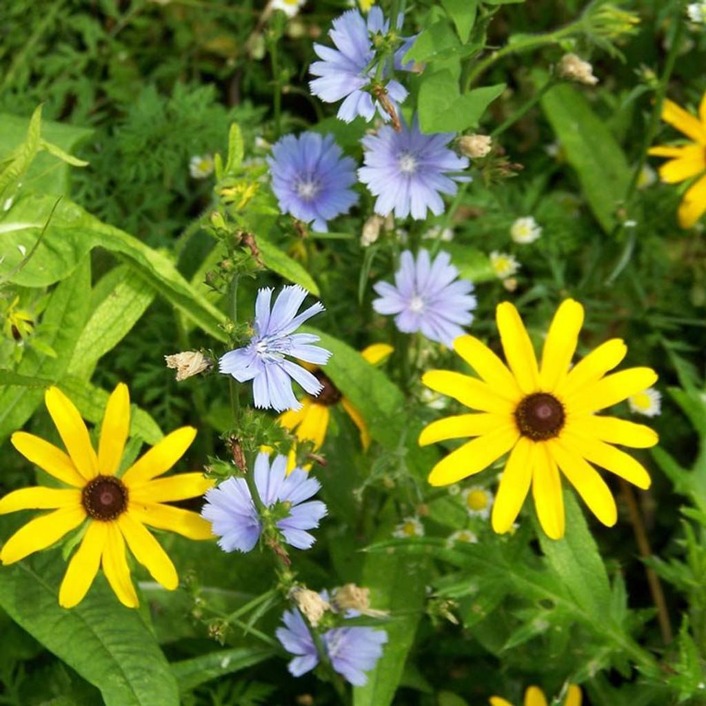 Mountain Wildflower Honey