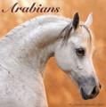 2017 Arabians Calendar