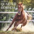 2017 American Quarter Horses Calendar