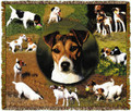 """Jack Russell Throw  SKU # A19-1401L  Adorable Jack Russells are beautifully displayed on this stunning throw. 100% cotton tapestry afghan.  Machine washable.  Made in the USA.  2.5 lbs.  60""""L x 48""""W"""