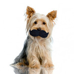 Silly Faces Mustache Pet Toy