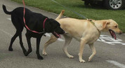Additional dog registration for the Bark Walk @ the Fort