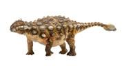 Ankylosaurus by PNSO