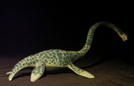 Elasmosaurus by Carnegie