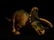 Triceratops by Wild Safari