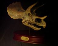 Triceratops Skull Replica by DinoStoreus