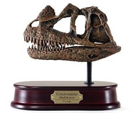 Ceratosaurus Skull Replica by DinoStoreus