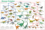 Dinosaur Evolution Poster