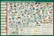 Milestones of Vertebrate Evolution Poster