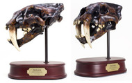 Smilodon Skull Replica by DinoStoreus