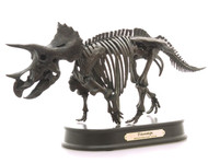 Triceratops Skeleton by Favorite