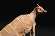 Saurolophus Resin Kit by Galileo Hernandez