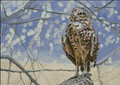 Burrowing Owl Cross Stitch