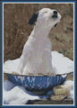 Sun Bathing Russell Terrier