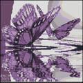 Purple Butterfly Reflections