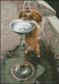 Golden Retriever Drinking At Fountain