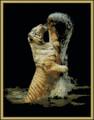 Splashing Tiger