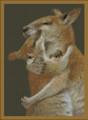 Cuddling Kangaroo's