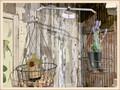 Hanging Basket Scale