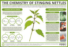 Benefits of Nettles