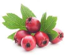 Hawthorne Berries