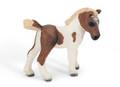 Falabella Foal