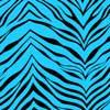 zebra-turquoise.jpg