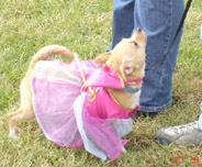 Pink Princess at the Barkin Bash