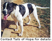 Bill Needs a Home - Contact Tails of Hope