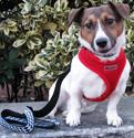 Double Adjustment Soft Mesh Dog Harnesses at PawsPetboutique.com