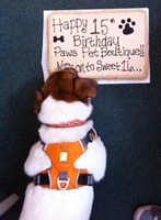 Ben celebrates 15th Anniversary of Paws pet boutique