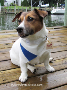 Ben loves life in Annapolis with PawsPetBoutique.com